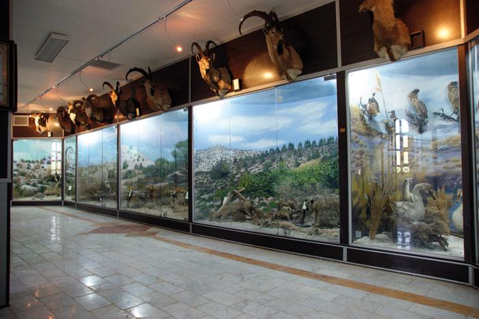 موزه تاریخ طبیعی شاهرود